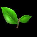 tea plant leaf icon